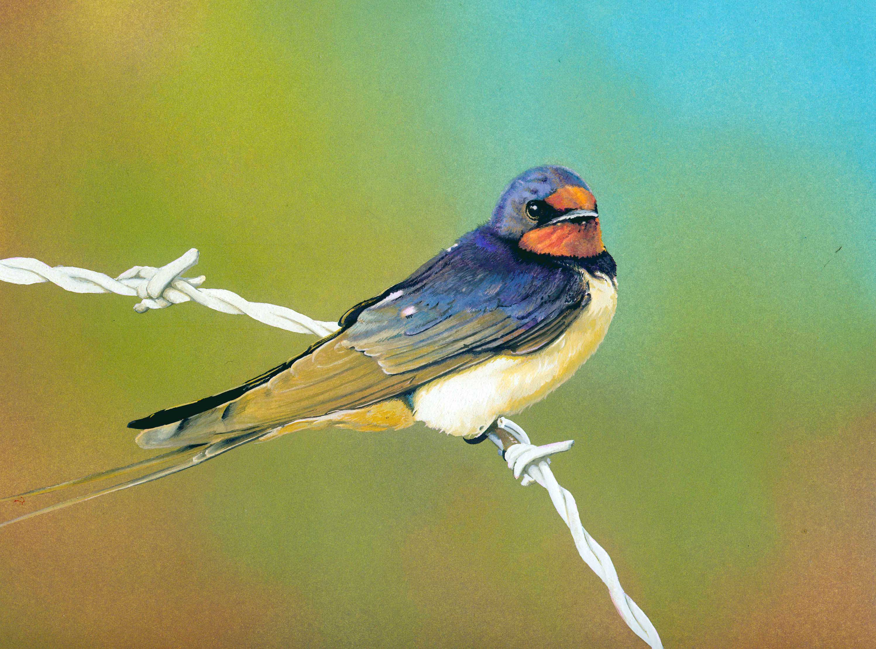 Swallow in Guache